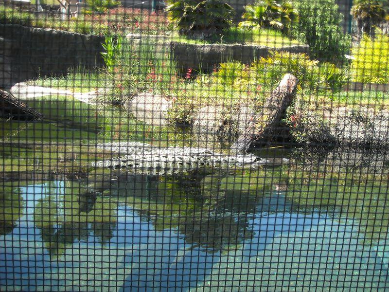 Oakland Zoo 012